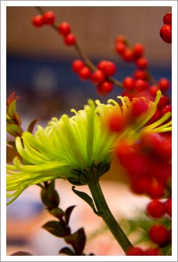 Macro_flowers