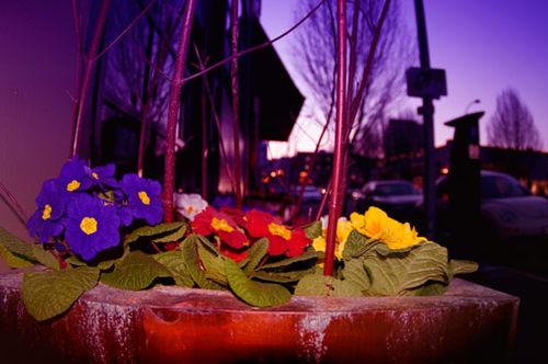 Floral_cityscape_viveza2