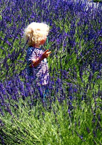 GirlInLavendar