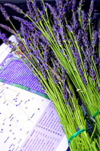 Map_lavender