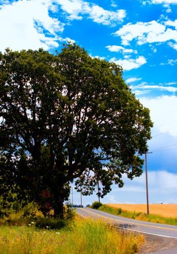 Treeandfield