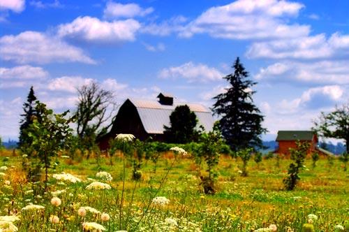 Field_and_barn