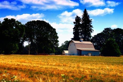 White_barn