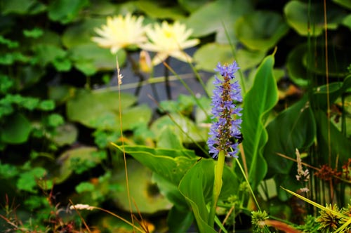 OreGarden_waterplants