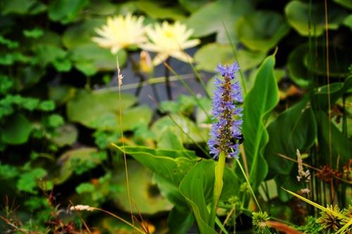 OreGarden_waterplants