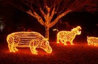 Zoolights_hippos